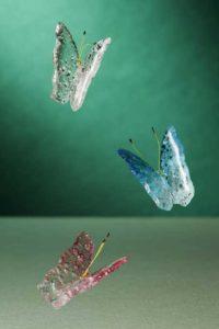 Andeal sucre bullé, Papillons en Vol